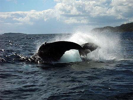ballena-2.jpg