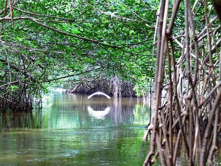 la-laguna-redonda-con-sus-manglares.jpg
