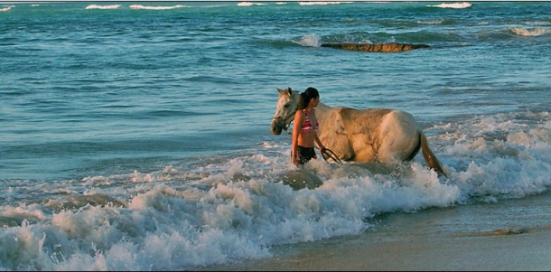 horses_in_playa_limon