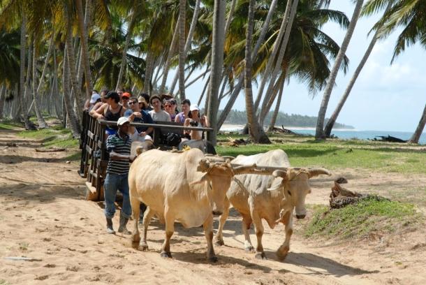 Turistas son transportados a bordo de una novedosa carreta tirada por bueyes.
