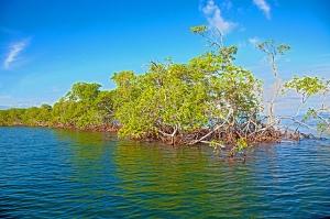 Bahía La Gina, es un bosque salado bañado por el Atlántico que se encuentra a un metro de altitud sobre el nivel del mar.